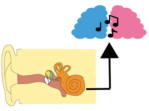 補聴器 両耳 理由 耳と脳の仕組み